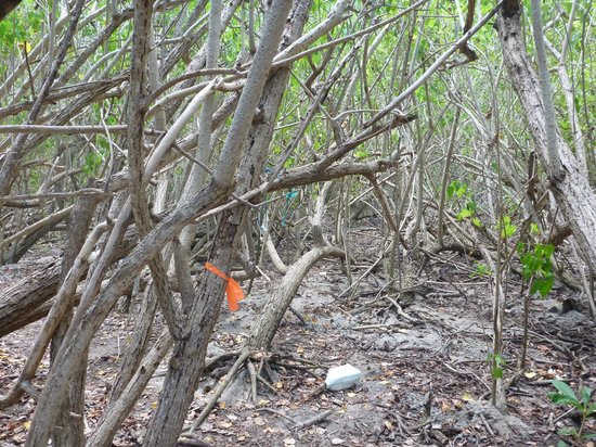 Casita Tropical: Resaca Hike