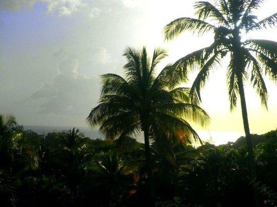 Habitation Grande Anse: Hotel view