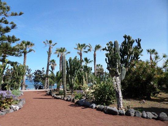 Playa Jardín: jardines