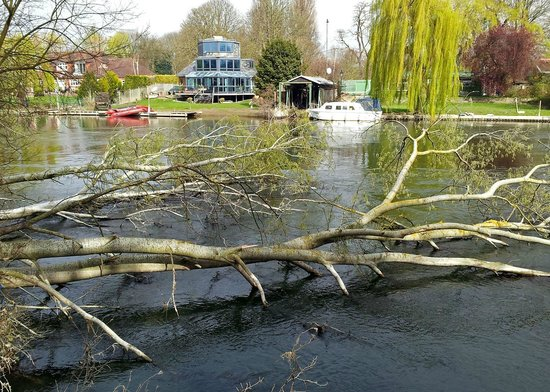 The Runnymede on Thames: Fallentrees in the Thames