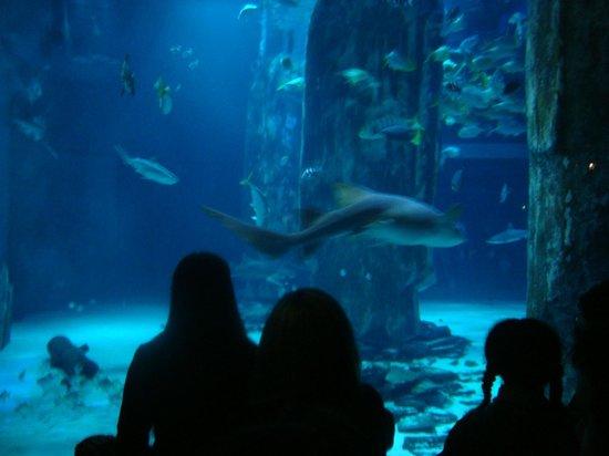 Interna Picture Of Sea Life London Aquarium London