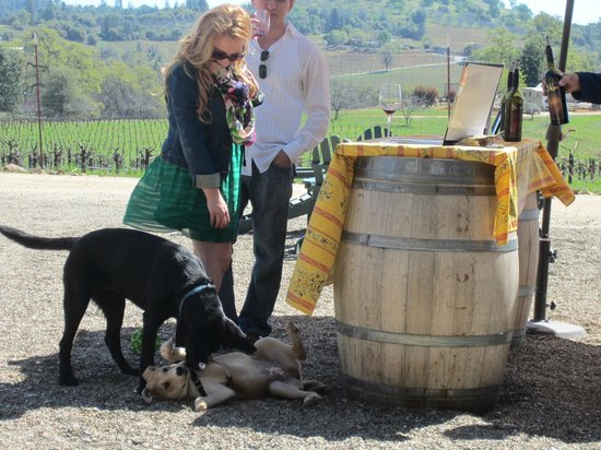BellaGrace Vineyards: Both humans and dogs enjoy the tasting bar.