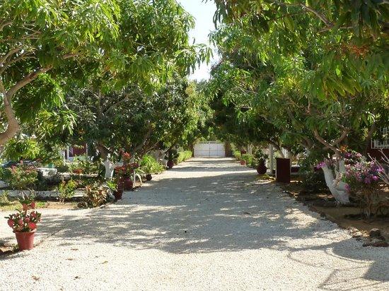 Domaine de la Mangrove : Une allée du Domaine