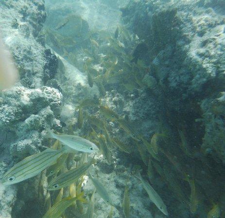 Hotel Playa Coco : Poissons à la plage