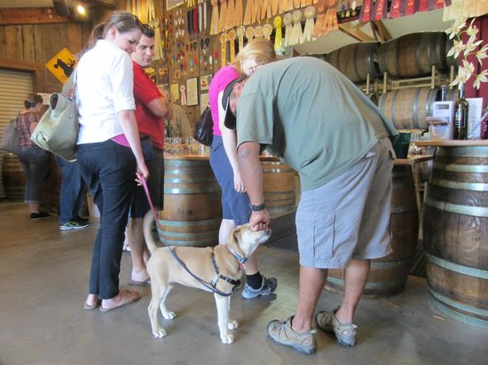 Bray Vineyards: Dog friendly.