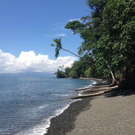 Playa Nicuesa Rainforest Lodge : Beach
