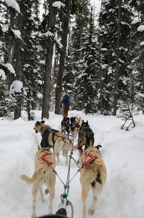 Fairmont Chateau Lake Louise: Dog sledding. This part was through the woods.