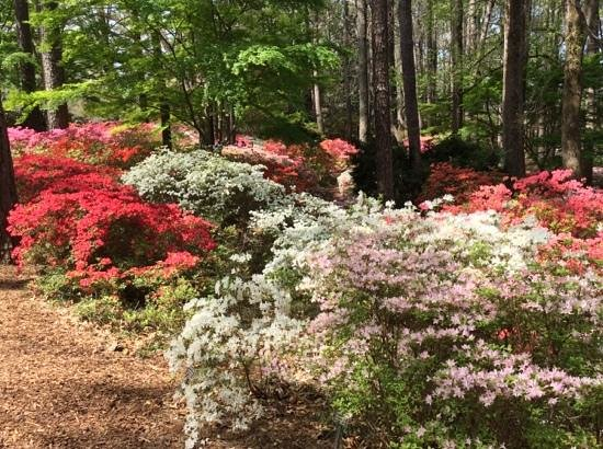 Gardens Restaurant at Callaway Gardens: Across the Road