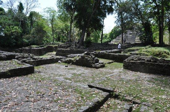 Lamanai Archaeological Reserve: Some of the living quarter ruins at Lamanai