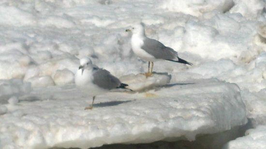 Victoria Resort Bed & Breakfast: seagulls on the icy beach