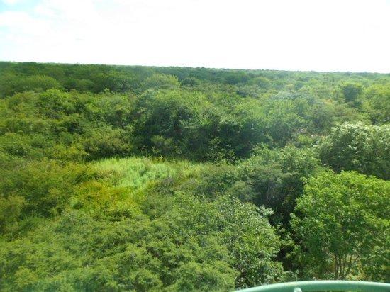 Januaria: Um verdadeiro tapete verde