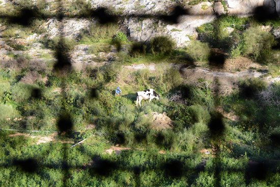 La Sultana Oualidia : Shepherds on the hillside during the day as seen from the back of the hotel room