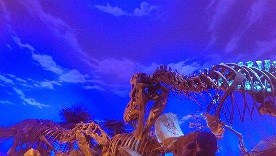 Children's Museum of Indianapolis : Cool dinosaur exhibit