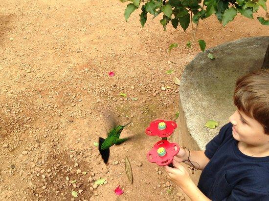 Peace Lodge: humming bird