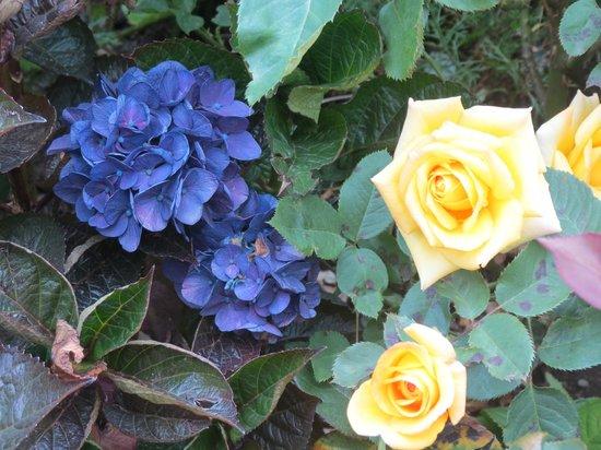 Fogon  Las Buenas Brasas : as flores