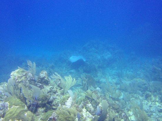 Dreamtime Dive Center : Friendly Eagle Ray