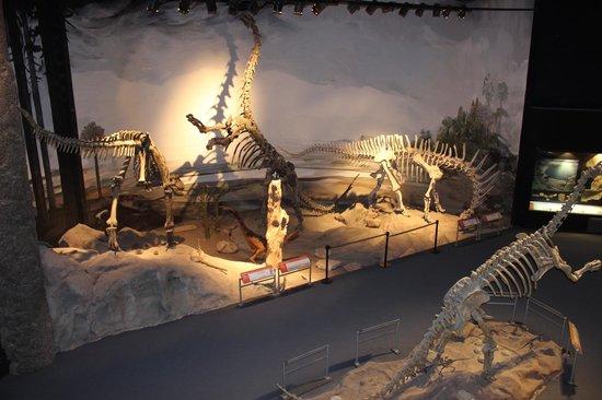 Museo Paleontologico Egidio Feruglio: Los peques disfrutaron esta experiencia!