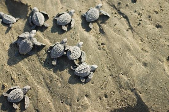 Playa Viva : Releasing turtles on the beach