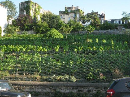 SANDEMANs NEW Europe - Paris : Vegetable Garden at Montmartre