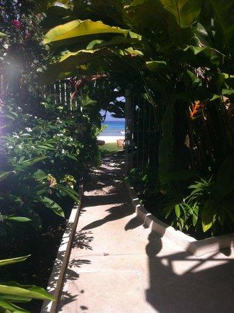 Treasure Beach : Garden path