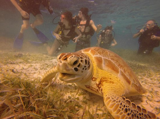 Belize Pro Dive Center: We saw several turtles during the dive. The Preserve is incredible! Literally like a scene from