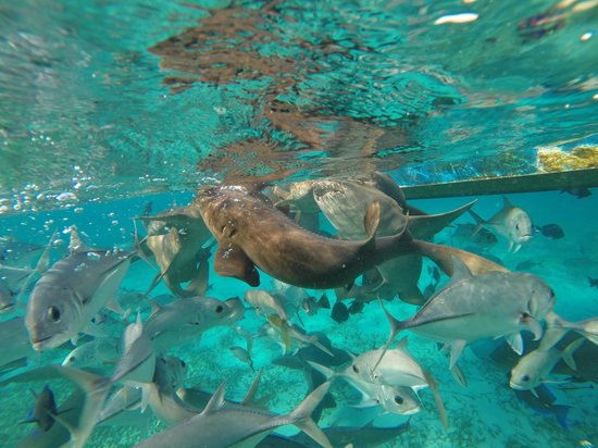 Belize Pro Dive Center: The kids loves swimming with the nurse sharks & rays