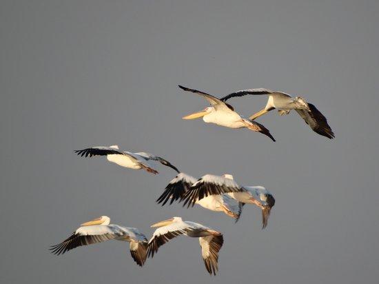 Khijadiya Bird Sanctuary : Flying 'Shot'
