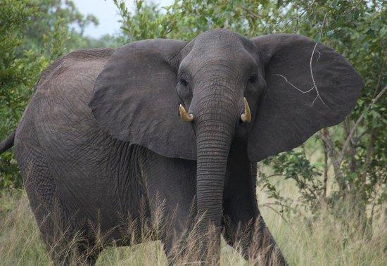 andBeyond Ngala Safari Lodge: Annoyed Ellie