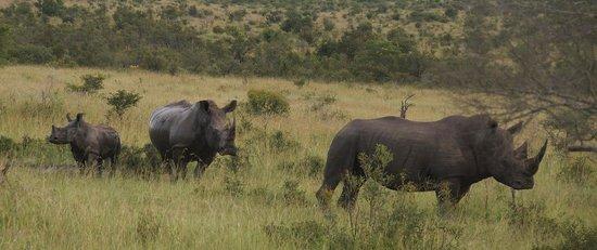 andBeyond Ngala Safari Lodge: Rhino