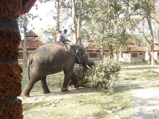 Dubare Elephant Camp : elephant visit to lodging