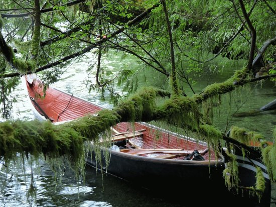 T'ashii Paddle School: Canoe snuggle up to the shore at Meares Island