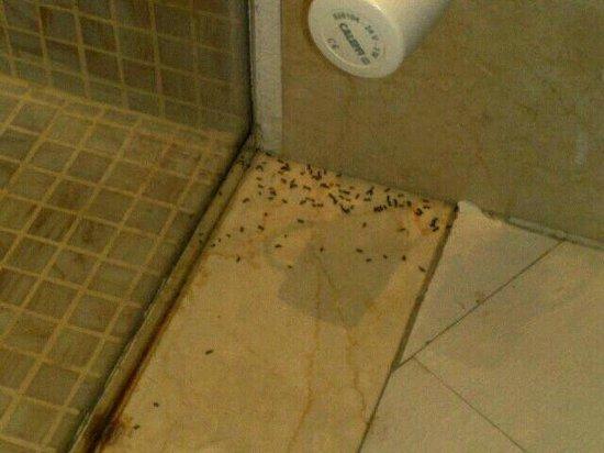 Hotel Riviera dei Fiori : angolo del bagno