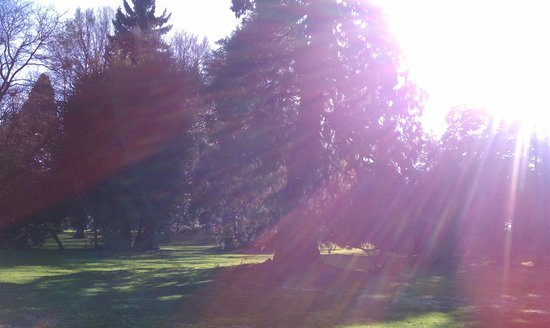 Volunteer Park Conservatory: Sunshine and Trees :), that combination can't be beat!