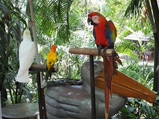 Kuala Lumpur Bird Park : Sick and locked Ara