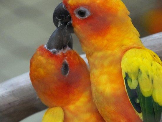 Kuala Lumpur Bird Park : Birds