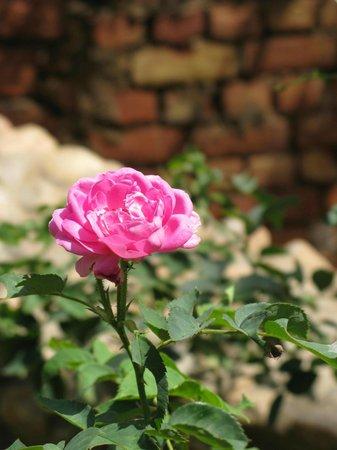 Sunshine Guesthouse: garden