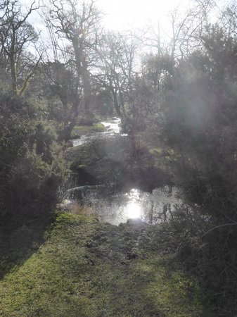 New Forest: Oooo