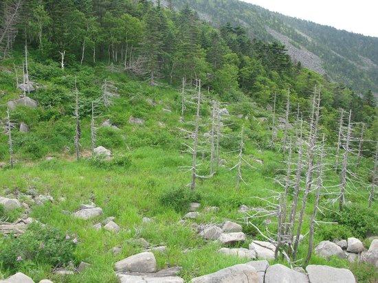 Livandyskaya Mountain