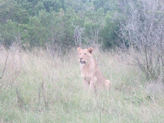 Kariega River Lodge : Small lion