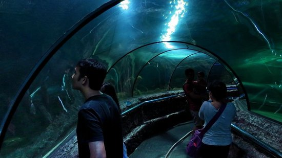 Sea World : The Tunnel..