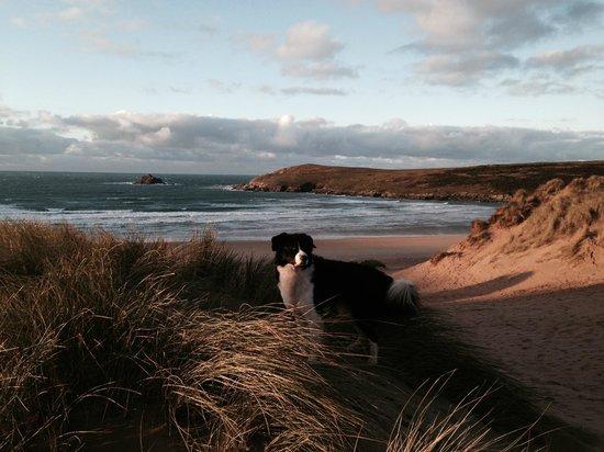 Highfields at Crantock: Crantock's Fantastic Year Round Dog Friendly Beach