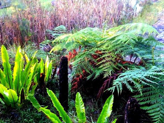 Spicers Sangoma Retreat: the gardens of Sangoma