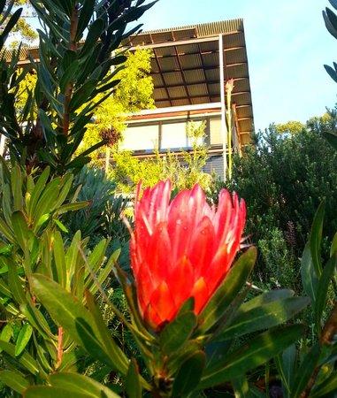 Spicers Sangoma Retreat: gardens of Sangoma