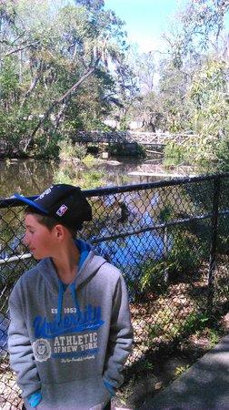 Sunshine River Tours - Crystal River Manatee Tours: Homossasa national forest