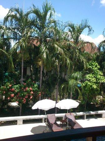 Florist Resort : Palms in the Garden
