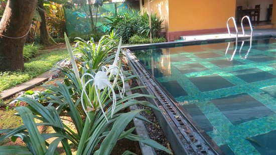 Tea Bungalow: poolside