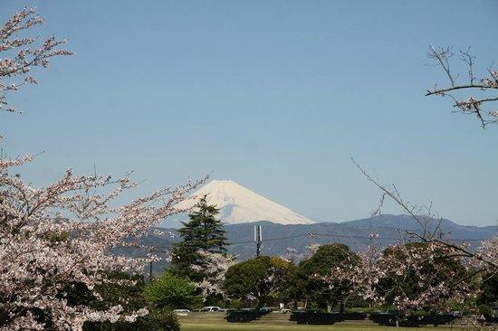 Komuroyama Park: 桜と富士山