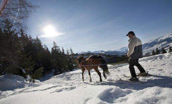 Ranch el Colorado : Ski Joering