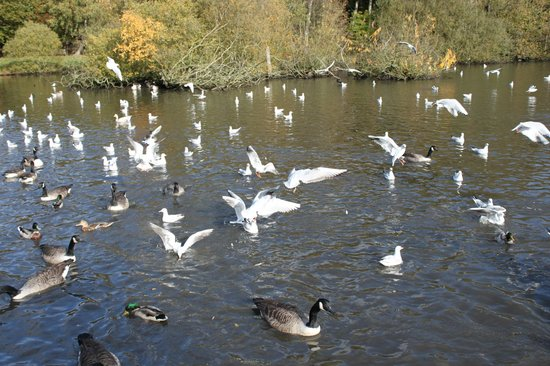 Golden Acre Park: feeding the wildlife at Golden Acre