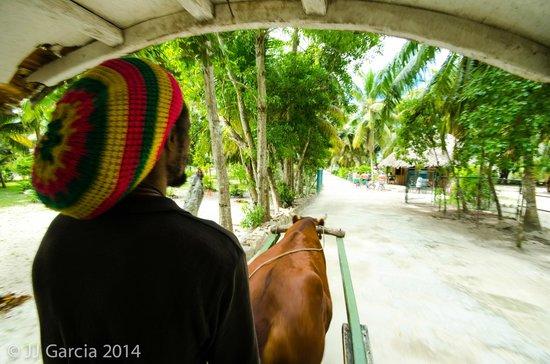 Mason's Travel: La Digue-Ox Cart